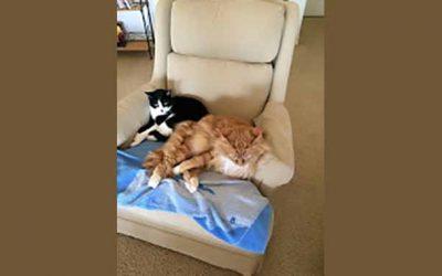 My Cat Companions